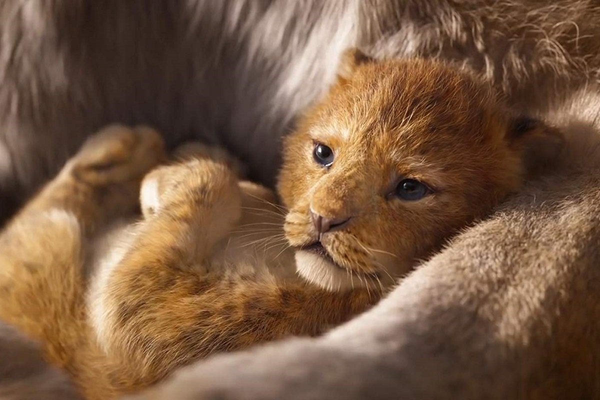Lion-King-kadr-1.jpg
